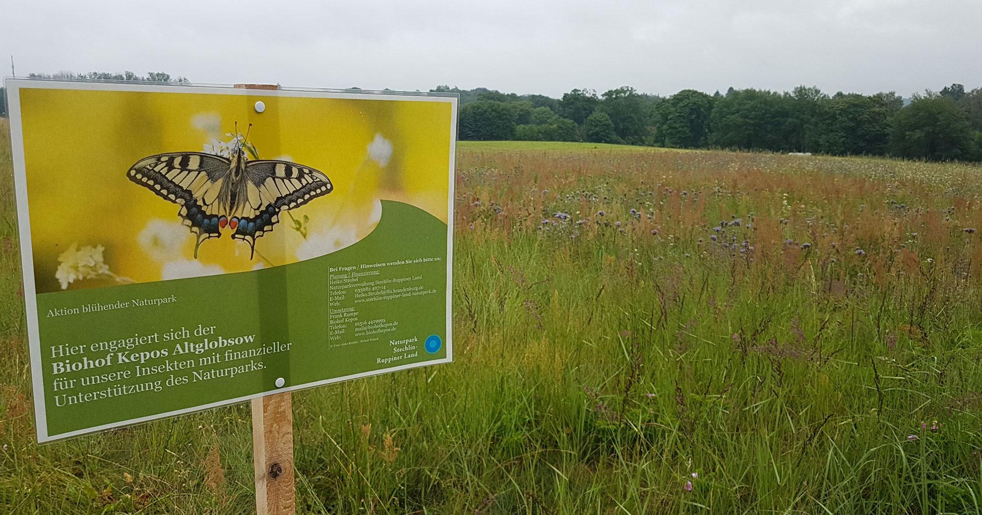 Insektenweide bei Fürstenberg