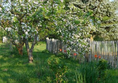 Apfelbäume an Pias Garten